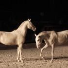 Konjenikova pot (foto Mediaspeed)